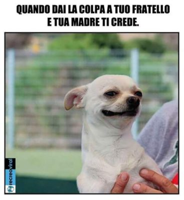 """""""MOMENTO POP"""" – FIGLI DI CANI"""