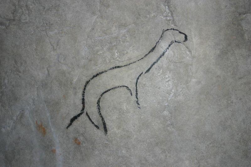 UNA GROTTA TIRA L'ALTRA, ALLA SCOPERTA DEI GRAFFITI - Disegno di una donnola in una galleria della grotta di Niaux scoperta nel 1970