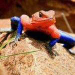 Spider Lizard